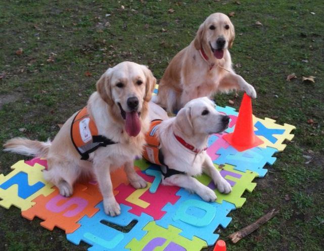 Resultado de imagen de terapias asistidas con animales