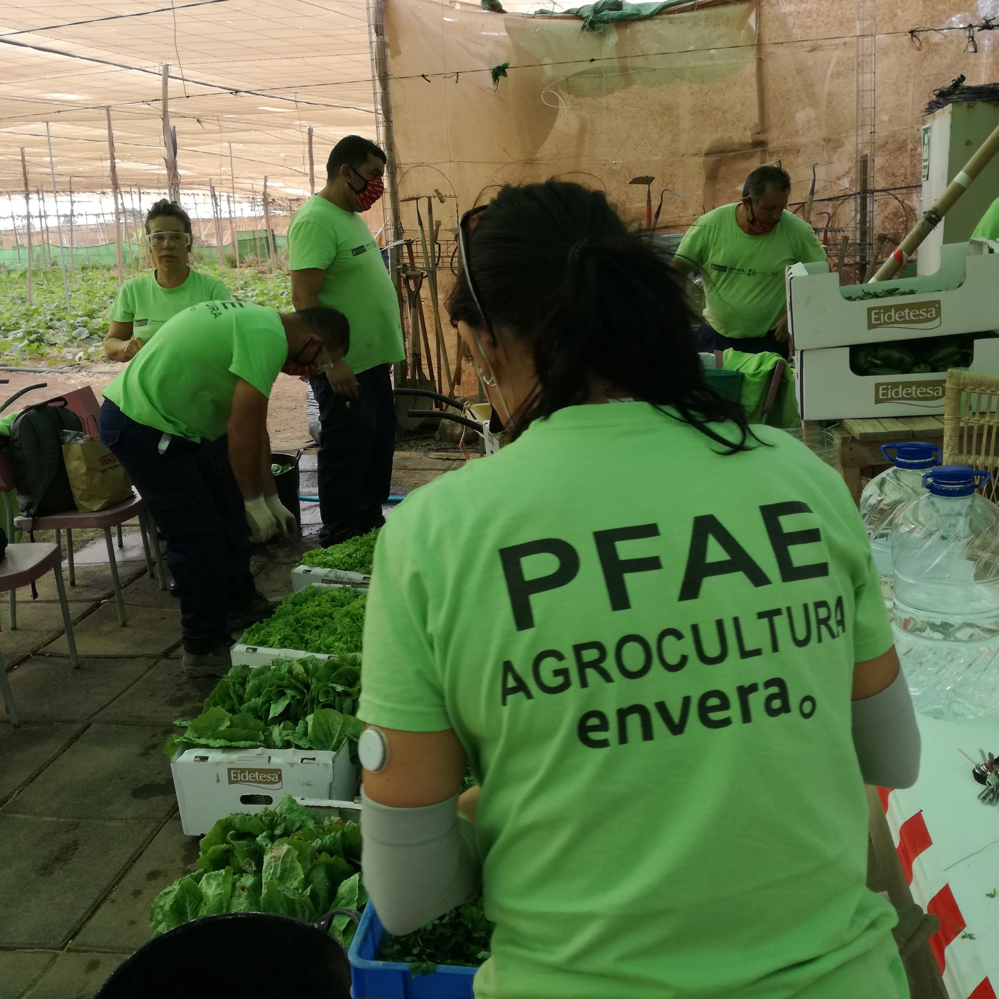 Agrocultura Envera colabora con el Banco de Alimentos de Las Palmas de Gran Canaria